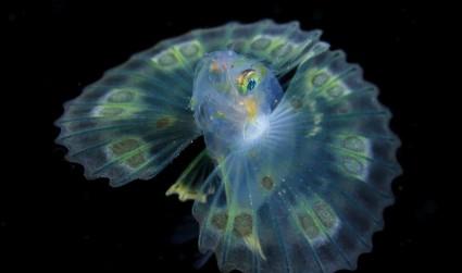 夜海中的寶石:在黑暗水域捕獲的發光生物相關圖片
