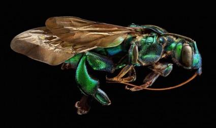 微距照片由近萬張圖片組成,展示了昆蟲標本令人難以置信的細節相關圖片