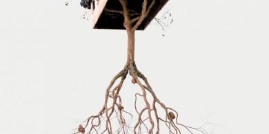 藝術家Jorge Mayet和他的樹木雕塑作品