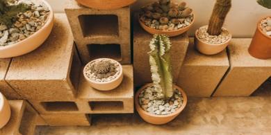 洛杉磯沙漠一般的仙人掌店