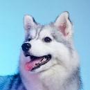 太空狗视觉的形象照