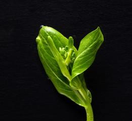 绿色美食蔬菜观念摄影
