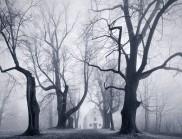 云霧森林:Kilian Sch?nberger 朦朧的捷克森林景觀攝影