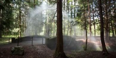詹姆斯·塔普斯科特(James Tapscott)——森林中的神秘弧线