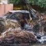 葡萄牙艺术家Bordalo II的创新垃圾动物雕塑