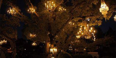 """洛杉矶银湖""""吊灯树""""背后的故事,作者:Adam Tenenbaum"""